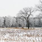 winter1gross