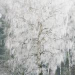 winter3gross