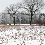 winter4gross
